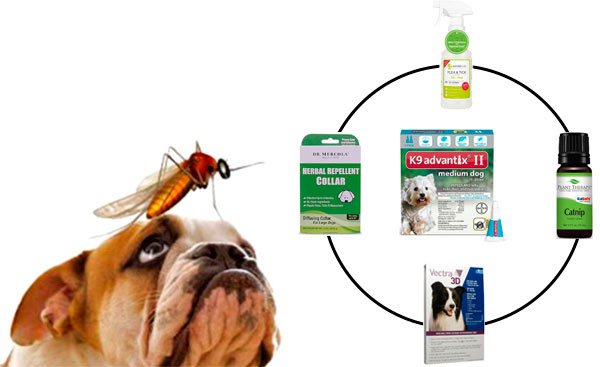 Mosquito repellents for dogs: TOP 5