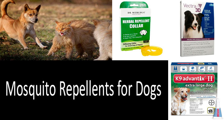 Mosquito Repellents For Dogs Top 5 Products